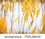yellow leaves of the weeping... | Shutterstock . vector #750128410