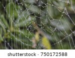 view of waterdrops on a spider... | Shutterstock . vector #750172588