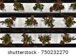 young red oak  green oak ... | Shutterstock . vector #750232270