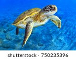 Stock photo green turtle 750235396