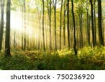 morning in the forest | Shutterstock . vector #750236920