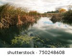 great lakes coastal marsh on a... | Shutterstock . vector #750248608