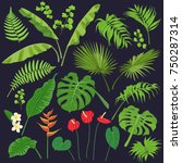 vivid tropical flowers and... | Shutterstock .eps vector #750287314