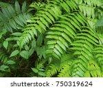 Natural Fern Leaf Decor Closeu...