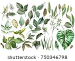 watercolor set. wild forest.... | Shutterstock . vector #750346798