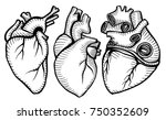 a set of human hearts. vector... | Shutterstock .eps vector #750352609