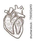 vector engraving heart. vector...   Shutterstock .eps vector #750352693