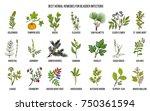 best herbal remedies for... | Shutterstock .eps vector #750361594