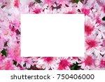 chrysanthemum  background...   Shutterstock . vector #750406000