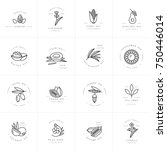 vector set design templates and ... | Shutterstock .eps vector #750446014