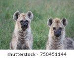 hyenas  | Shutterstock . vector #750451144