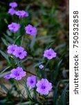 purple flowers   Shutterstock . vector #750532858