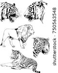 set of vector drawings on the... | Shutterstock .eps vector #750563548