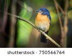 beautiful bird perching on a... | Shutterstock . vector #750566764