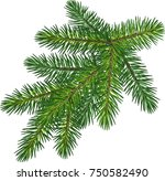 the branch of spruce and fir | Shutterstock .eps vector #750582490