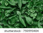 creative layout made of green... | Shutterstock . vector #750593404