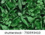 creative layout made of green... | Shutterstock . vector #750593410