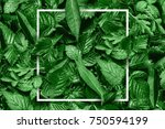 creative layout made of flowers ... | Shutterstock . vector #750594199