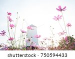 cosmos flower field  pink and... | Shutterstock . vector #750594433