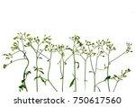 flower grass on white background | Shutterstock . vector #750617560