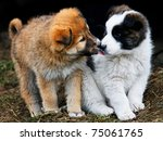 Stock photo puppies showing affection to each other 75061765