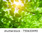 green leaves and sun | Shutterstock . vector #750633490