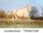 palomino horse running free.   Shutterstock . vector #750687280