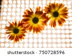 bright flowers  autumn flowers  ... | Shutterstock . vector #750728596
