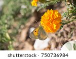 beautiful butterfly perching on