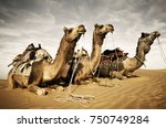 camels resting in the desert.... | Shutterstock . vector #750749284
