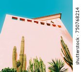 Small photo of Minimal art. Tropical mood. Tropical location. Cacti and greens on pink