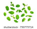 mint leaves isolated on white... | Shutterstock . vector #750775714