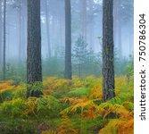 foggy sunrise in the beautiful... | Shutterstock . vector #750786304