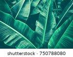 tropical banana leaf texture ... | Shutterstock . vector #750788080