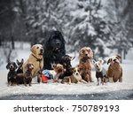 Stock photo many different breeds of dogs under the snow 750789193