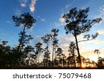 Sunset Over A Forest In The...