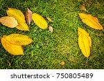 autumn background | Shutterstock . vector #750805489