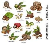 sketch variety of nuts food... | Shutterstock .eps vector #750825163