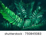 tropical jungle foliage  nature ... | Shutterstock . vector #750845083