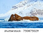 winter arctic landscape with...   Shutterstock . vector #750875029