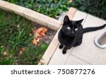 Stock photo black cat sitting on the ground and looking ahead view from above 750877276
