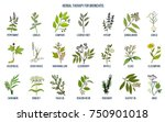 herbal therapy for bronchitis.... | Shutterstock .eps vector #750901018