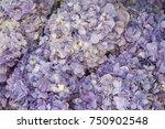 florist with hydrangea | Shutterstock . vector #750902548