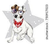 vector portrait of jack russel... | Shutterstock .eps vector #750917023