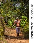 Small photo of Brickaville, Madagascar - September 17, 2015: a bare chested and bare feet man carries a heavy load of green bananas, in a tropical setting.