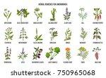 best herbal remedies to treat... | Shutterstock .eps vector #750965068