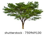 isolated tree on white... | Shutterstock . vector #750969130