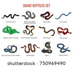 snakes reptiles set with boa of ...