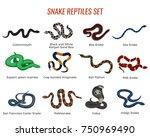 Snakes Reptiles Set With Boa O...