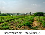 landscape of organic vetgetable farm with fertile mountain